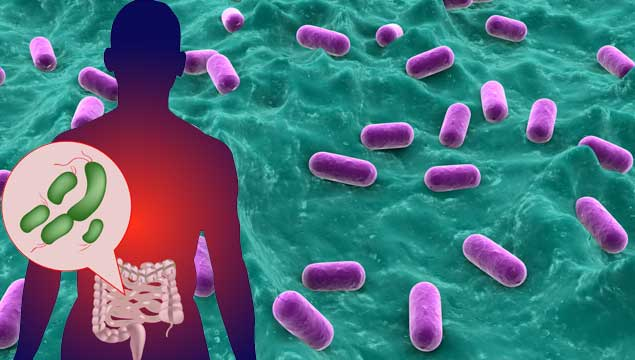 Gut-Bacteria-Microbiome1
